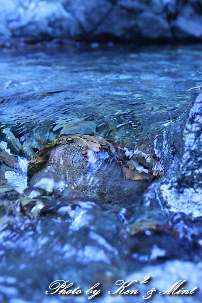 涼を求めて・・ 「自然の宝石」 ♪_e0218518_2022763.jpg