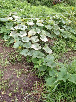 収穫_e0232918_1462015.jpg