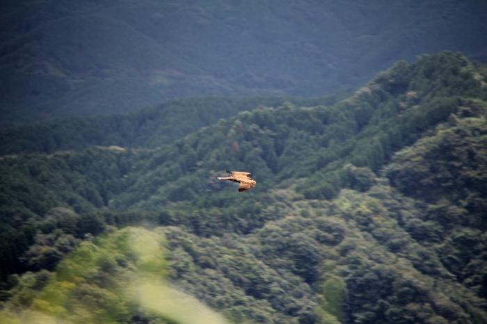 2014.8.24 今日の鳥見は700gの減量・矢倉岳・ヒガラ、ハヤブサ、イワツバメ_c0269342_19560152.jpg