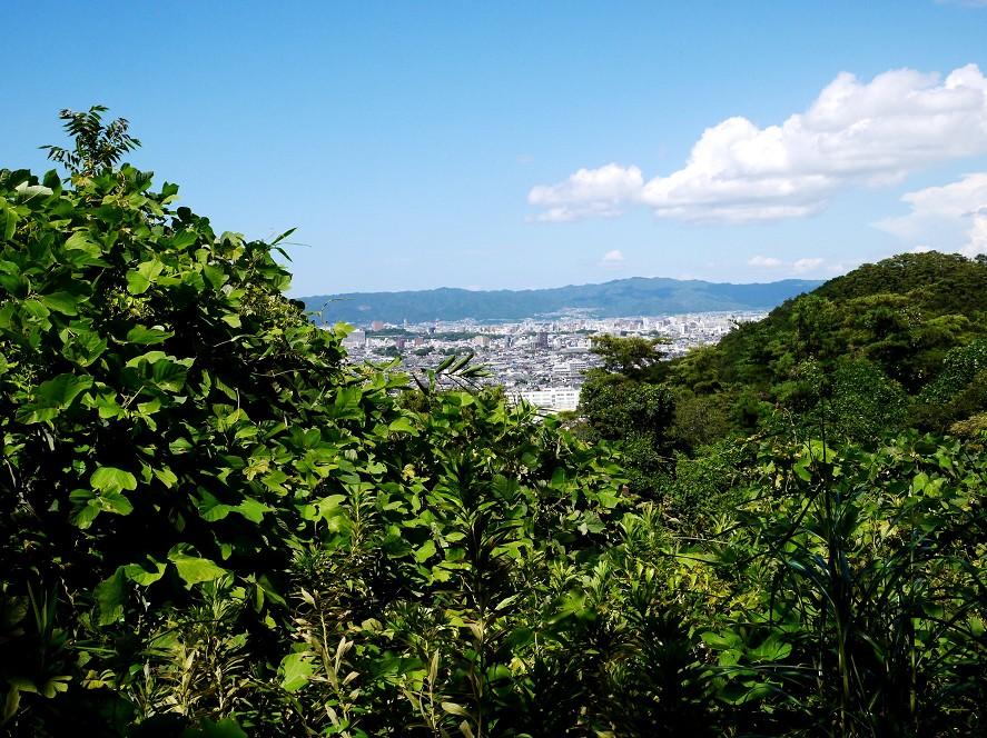 高津子山_b0093754_1555292.jpg