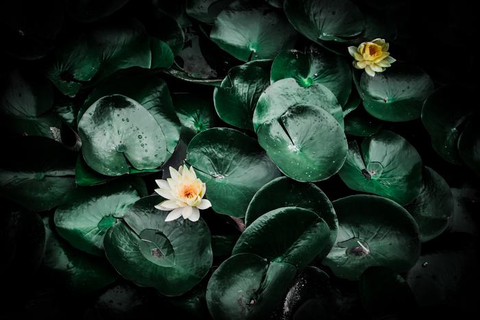 lotus_d0122257_13261925.jpg