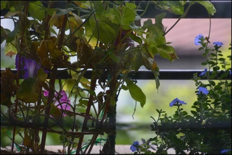 猛暑の夜は<はなもぎ>の黄金桃でベリーニを!_a0031363_22364197.jpg
