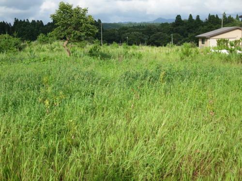Q1住宅井川土縁:基礎の養生2とブナ_e0054299_11015821.jpg