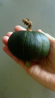 かぼちゃ初収穫_c0289116_1644302.jpg