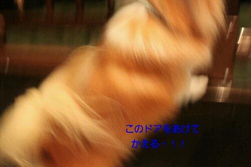 b0130018_1235643.jpg