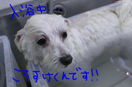 b0130018_22113841.jpg