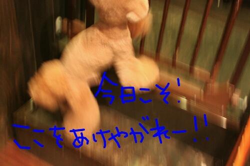 b0130018_22181223.jpg
