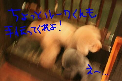 b0130018_22191221.jpg