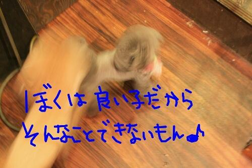 b0130018_2220374.jpg