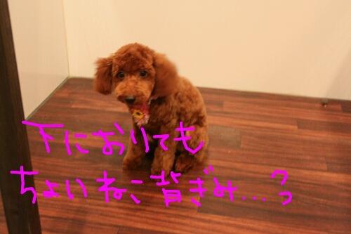 b0130018_2231168.jpg