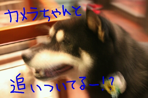 b0130018_23104965.jpg
