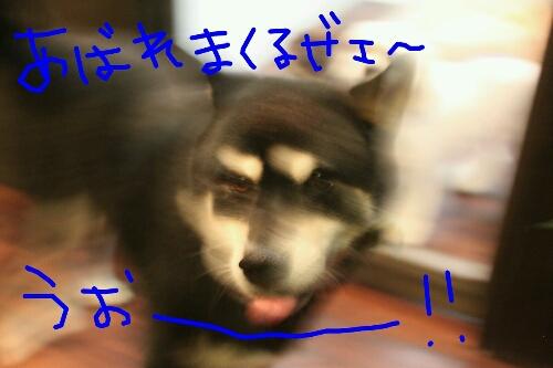 b0130018_2310743.jpg