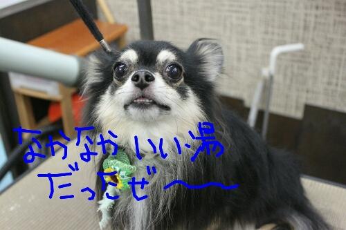 b0130018_2324882.jpg