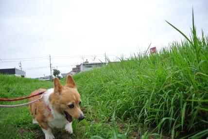 8/25 お散步01_e0236430_19325686.jpg