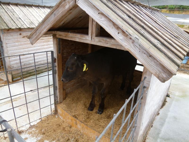 (有)哲多和牛牧場を視察。_c0326333_07523072.jpg