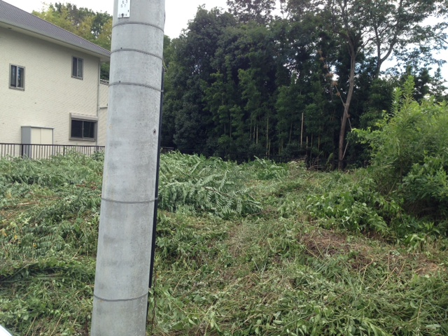 草刈り_a0137049_11403861.jpg