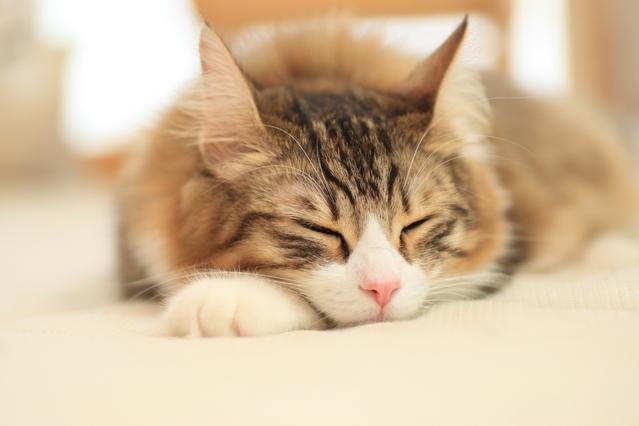 きょうはこんな感じ・・・眠いよう。ゆっくり休もう。_c0011649_7284163.jpg