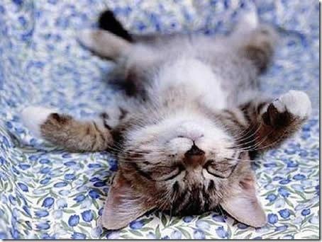 きょうはこんな感じ・・・眠いよう。ゆっくり休もう。_c0011649_7301495.jpg