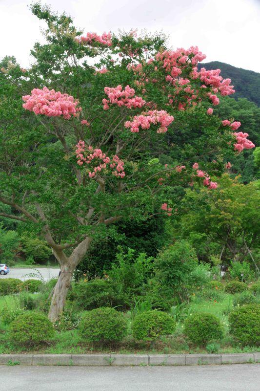 秋の花や秋の風・・・_b0100253_14513819.jpg