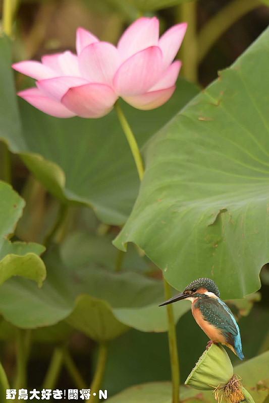 花の近くで_f0059882_8154736.jpg