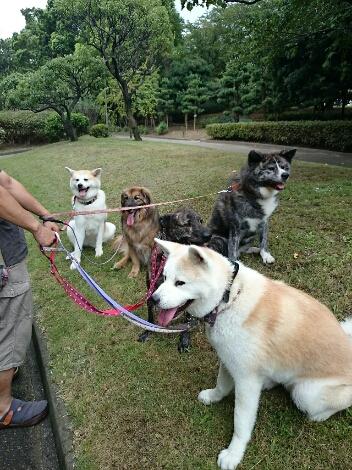 公園三昧 ~土曜編~_e0297387_19264464.jpg