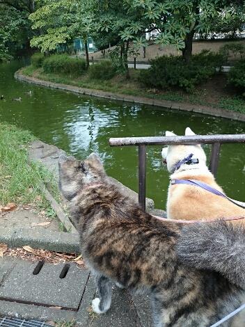 公園三昧 ~土曜編~_e0297387_1935151.jpg