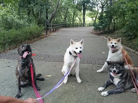 公園三昧 ~日曜編~_e0297387_22271670.jpg