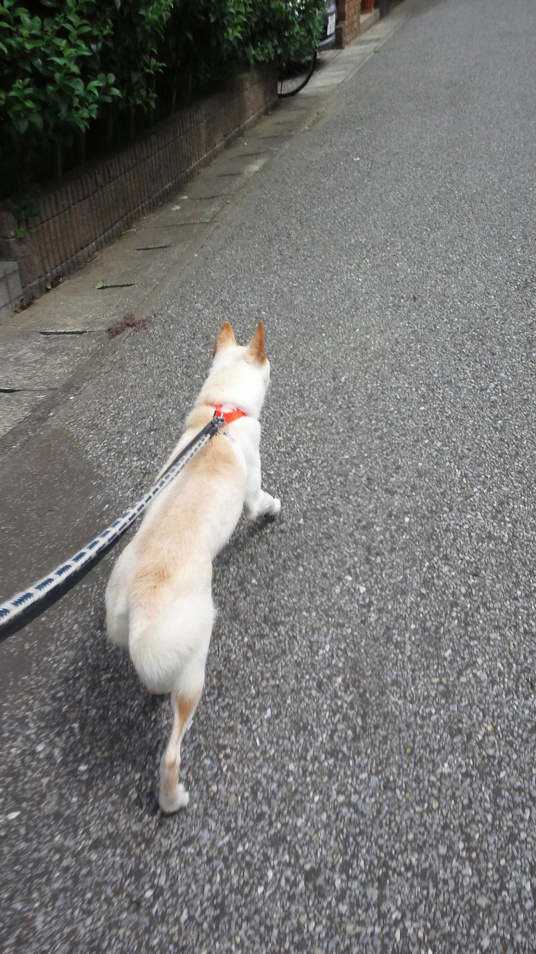 お散歩は・・・(なつ)_f0242002_0541658.jpg