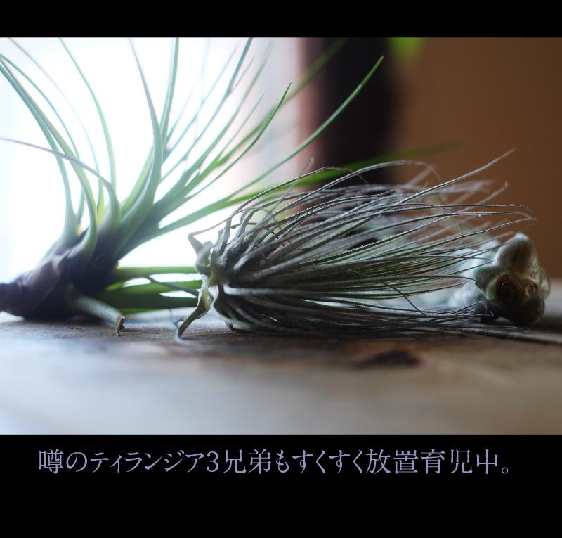 b0344119_21292911.jpg