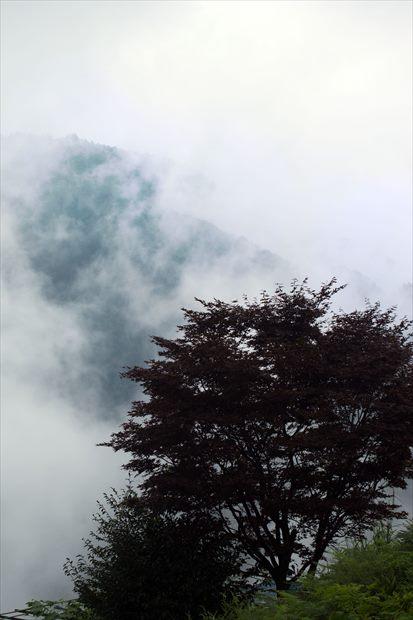 森の妖精が魅せる_e0305388_883816.jpg