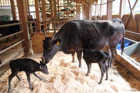 放牧牛肉に取り組む我が家の強み。_d0099005_00155131.jpg