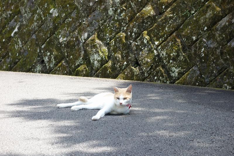 2014年宮崎夏合宿の写真-日南海岸編-_d0116009_1175817.jpg