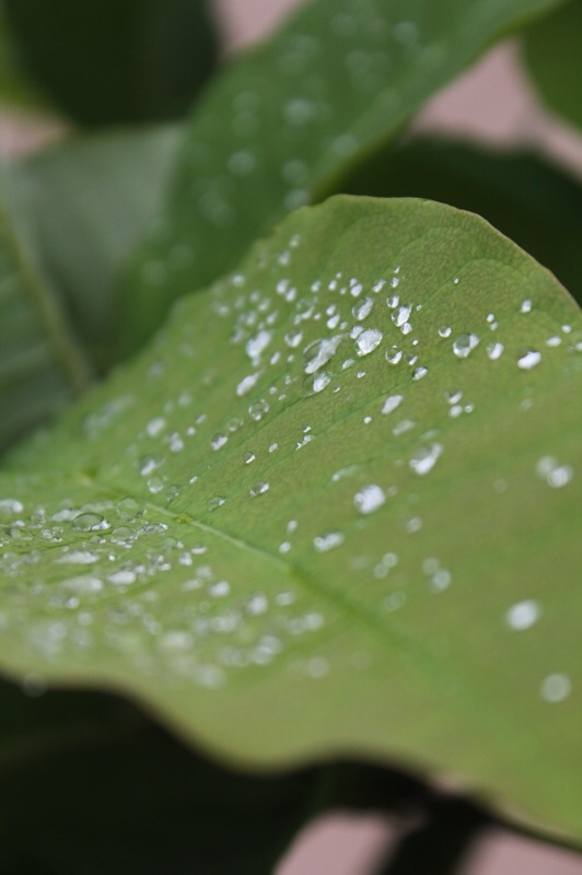 ジャングリッシュな庭から_b0132338_10355373.jpg