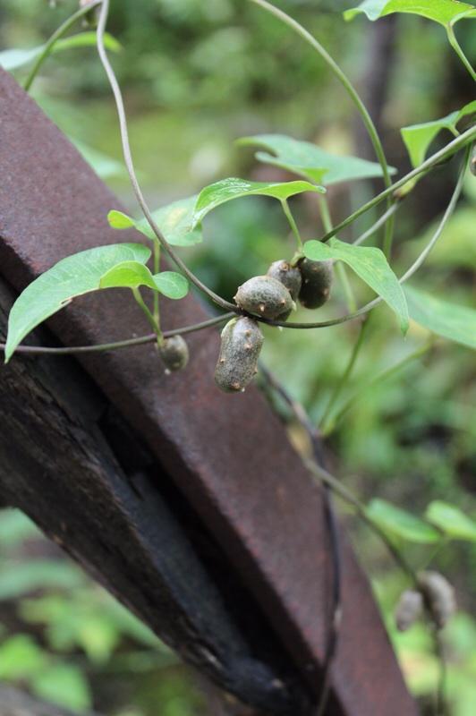 ジャングリッシュな庭から_b0132338_10365119.jpg