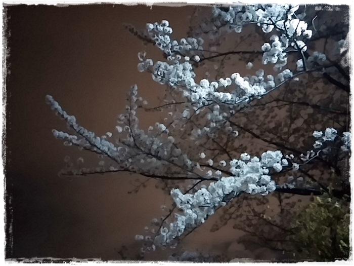 4月の記録,,,_b0025947_1624653.jpg
