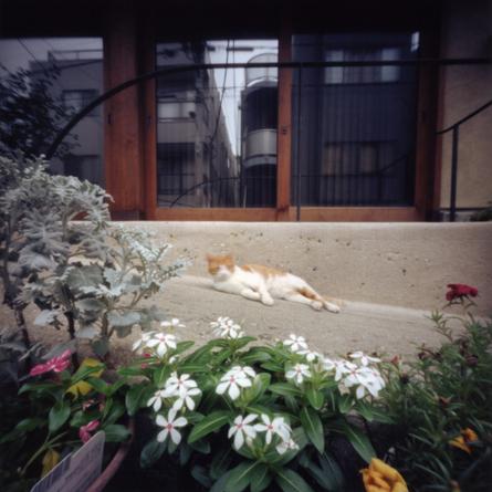 谷中の猫 Pinhole Photography_f0117059_9403235.jpg