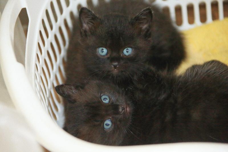 子猫の貰い手募集します。_f0075075_702757.jpg