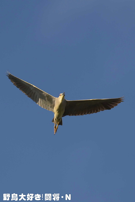 青空に飛ぶ_f0059882_7122989.jpg