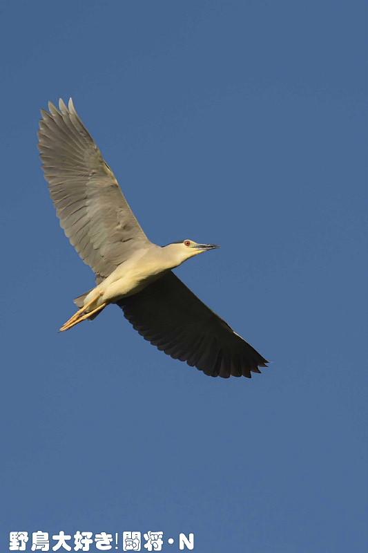 青空に飛ぶ_f0059882_7123837.jpg