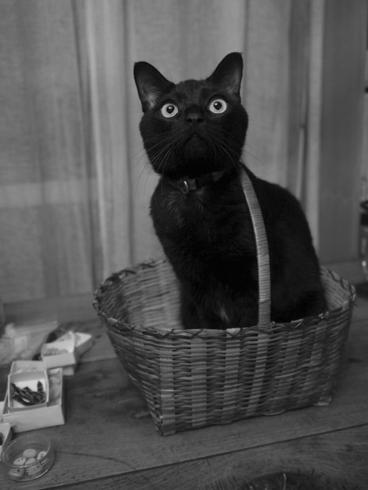 20141017 #blackcat #黒猫_d0176130_21544989.jpg
