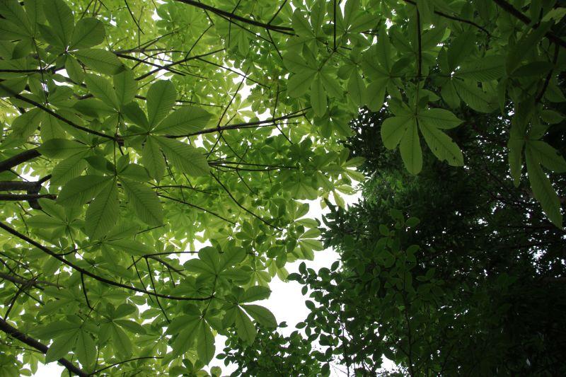 樹下で・・_b0100253_21241699.jpg