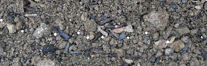 ニンジンの種を再び蒔き直し、ホウレンソウは初蒔き8・28_c0014967_16534683.jpg