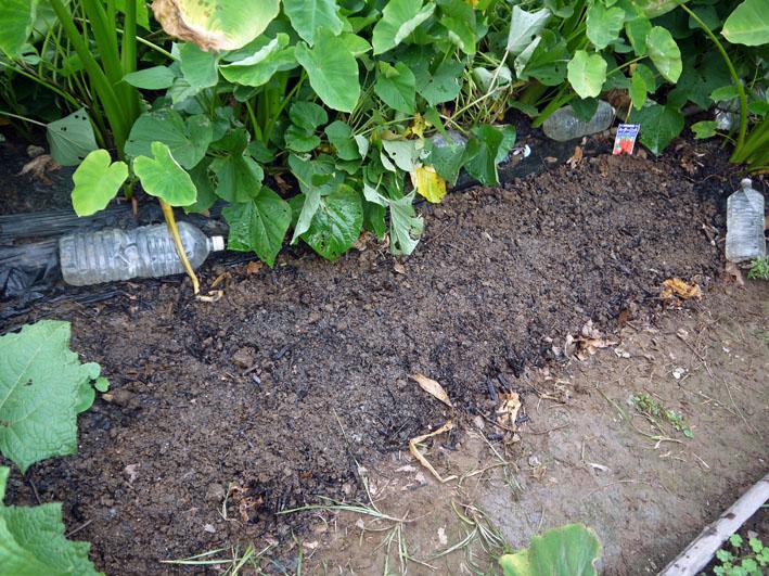 ニンジンの種を再び蒔き直し、ホウレンソウは初蒔き8・28_c0014967_1654916.jpg