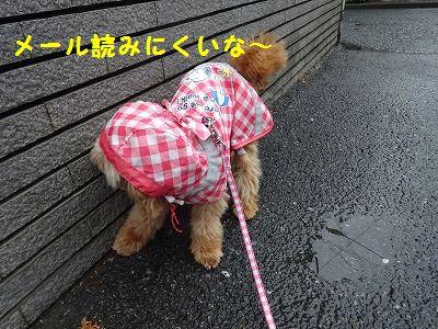 秋雨前線停滞中_e0222588_16470390.jpg