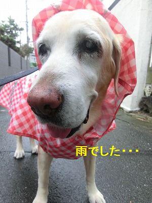 秋雨前線停滞中_e0222588_16470961.jpg