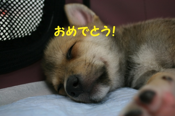 8/24 来夢里親会_f0242002_2155046.jpg