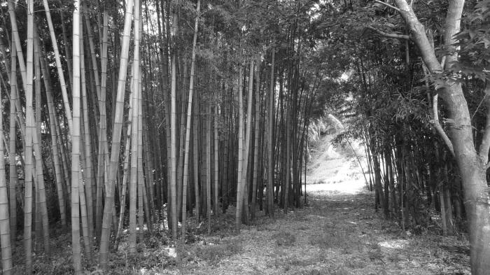 京都三日目(観光!)_b0290816_11152736.jpg