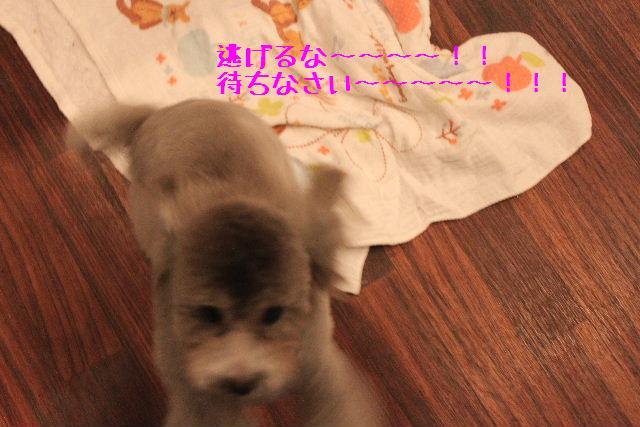b0130018_173293.jpg