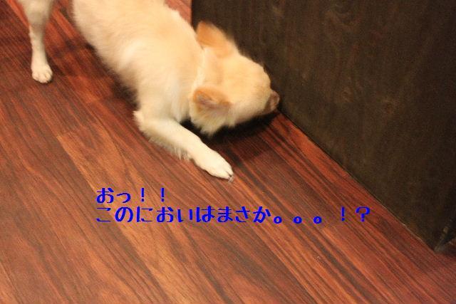 b0130018_17361411.jpg