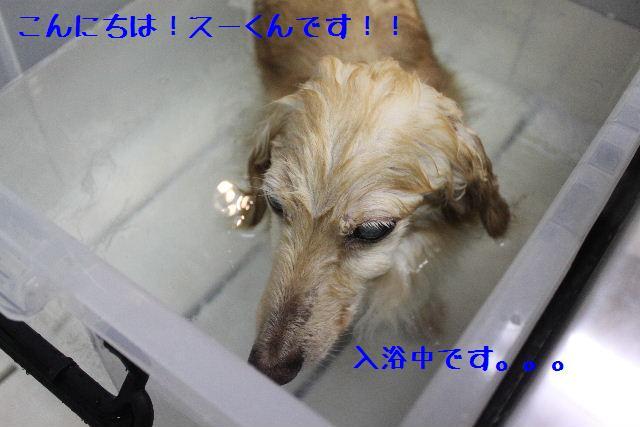 b0130018_1741599.jpg